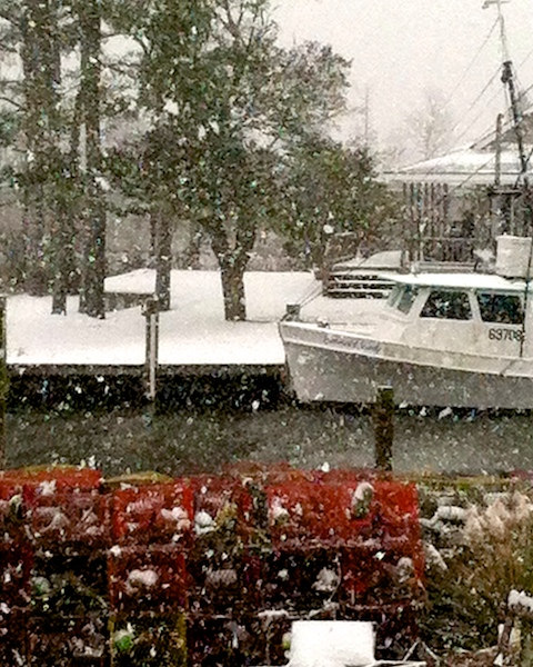 snow bruno