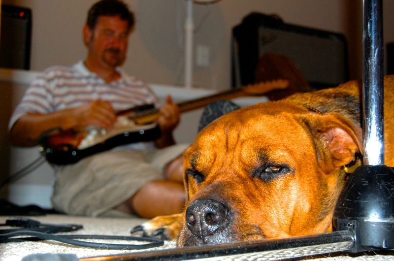 mooky chris daniels dog nap guitar