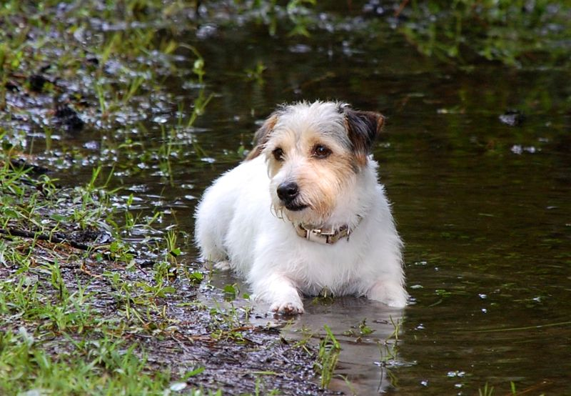 betsy helen bland jack russell puddle
