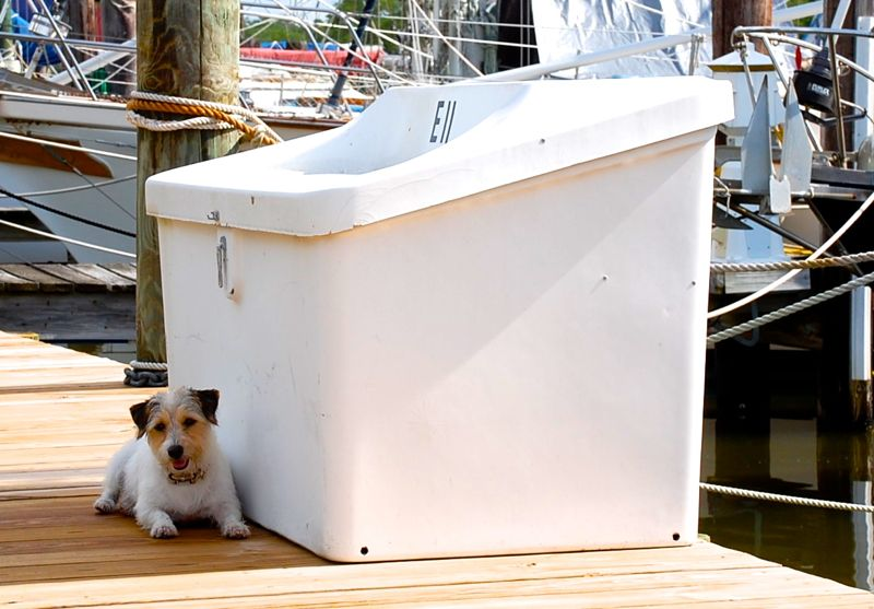 betsy helen bland jack russell dock box shade