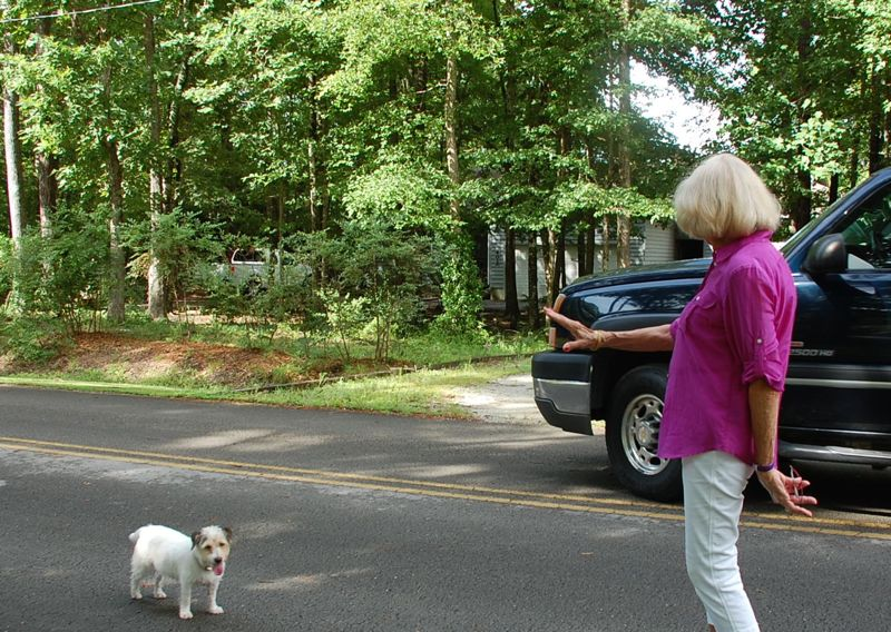 betsy helen bland jack russell stop vehicle