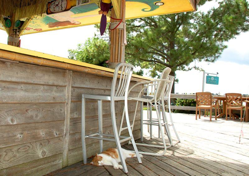 cat ike eisenhower oriental marina tiki bar bar stool nap