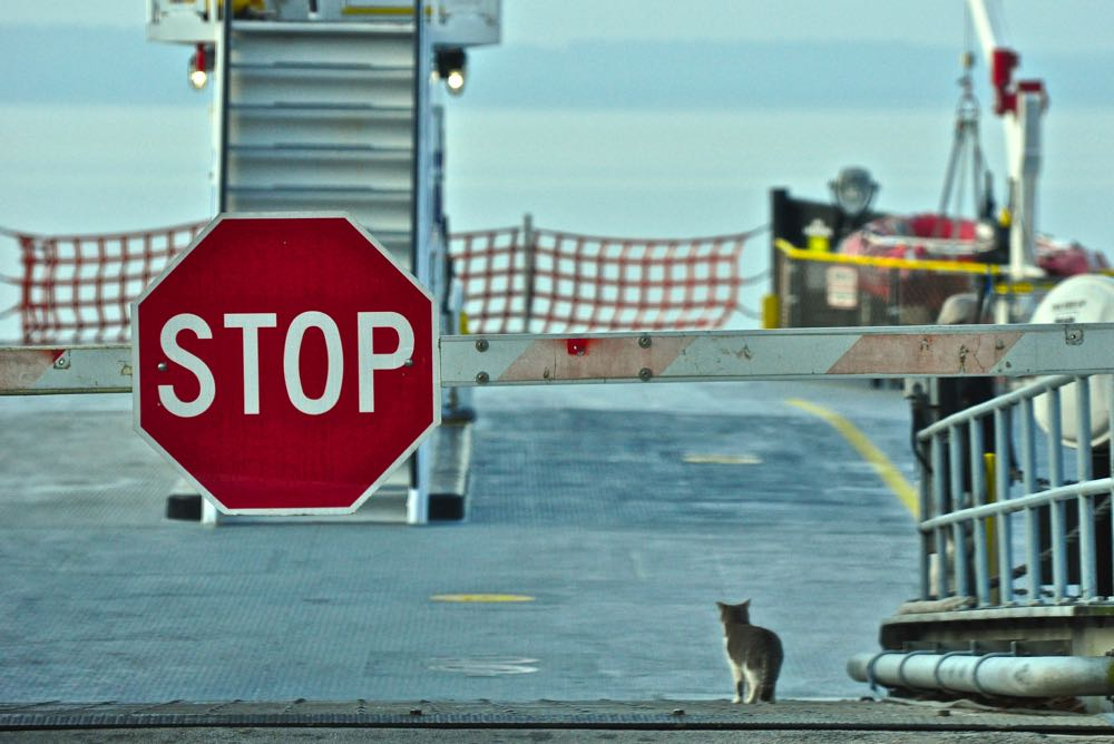 cat ferry