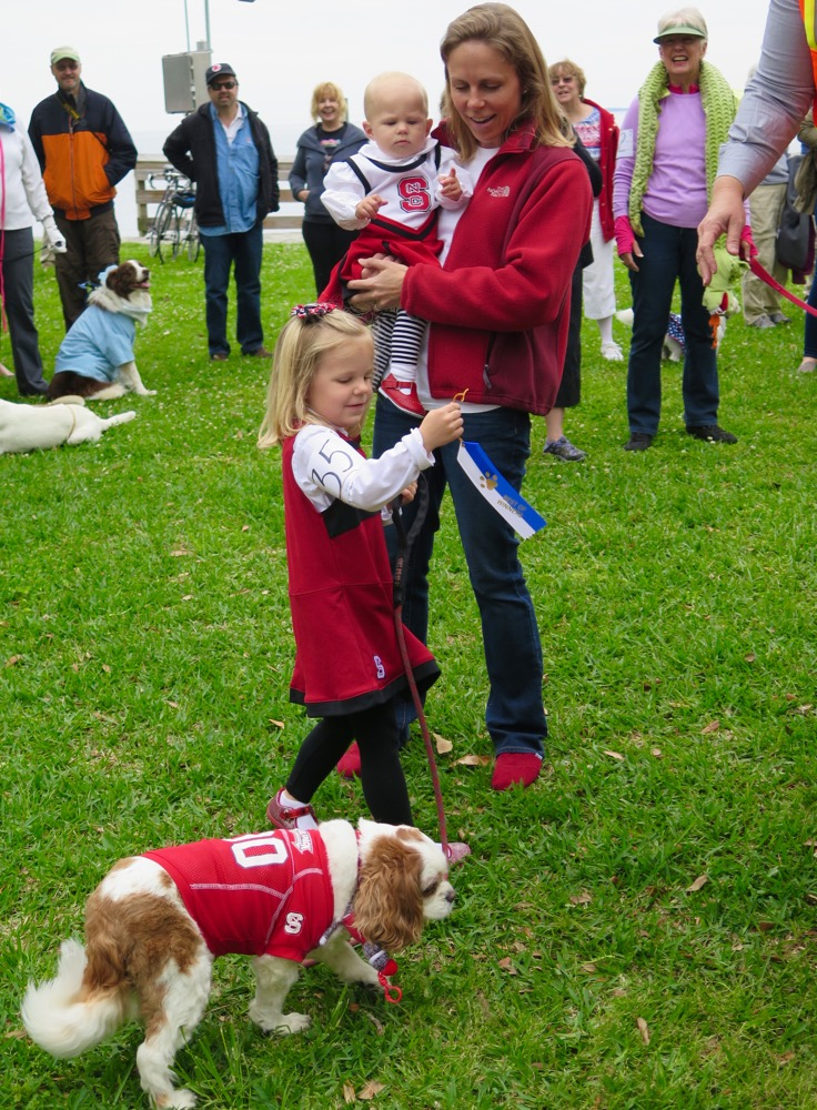 paws pet parade 2015