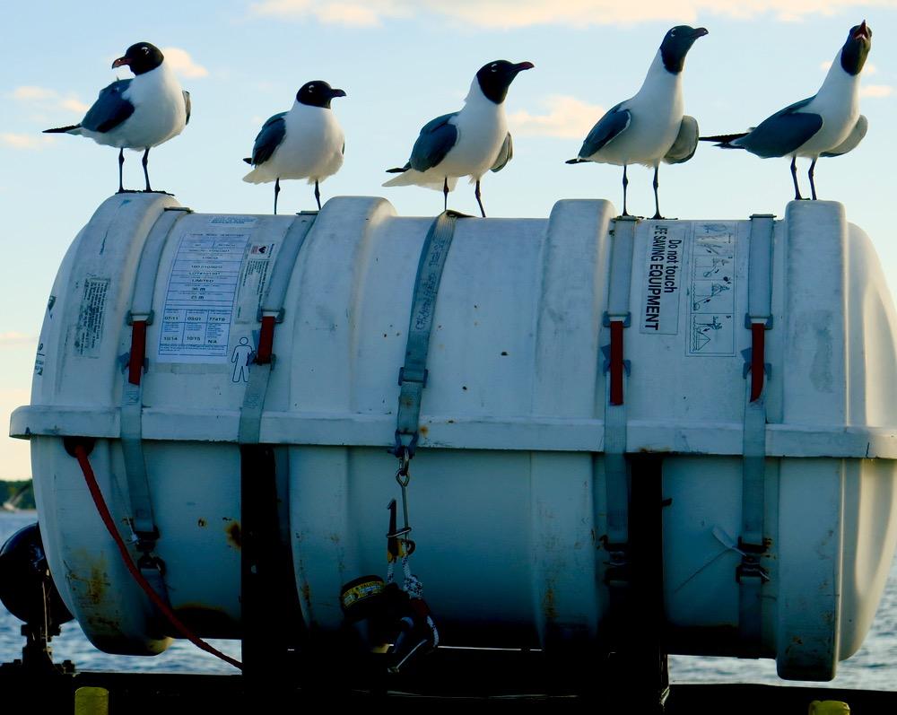 gulls ferry life raft